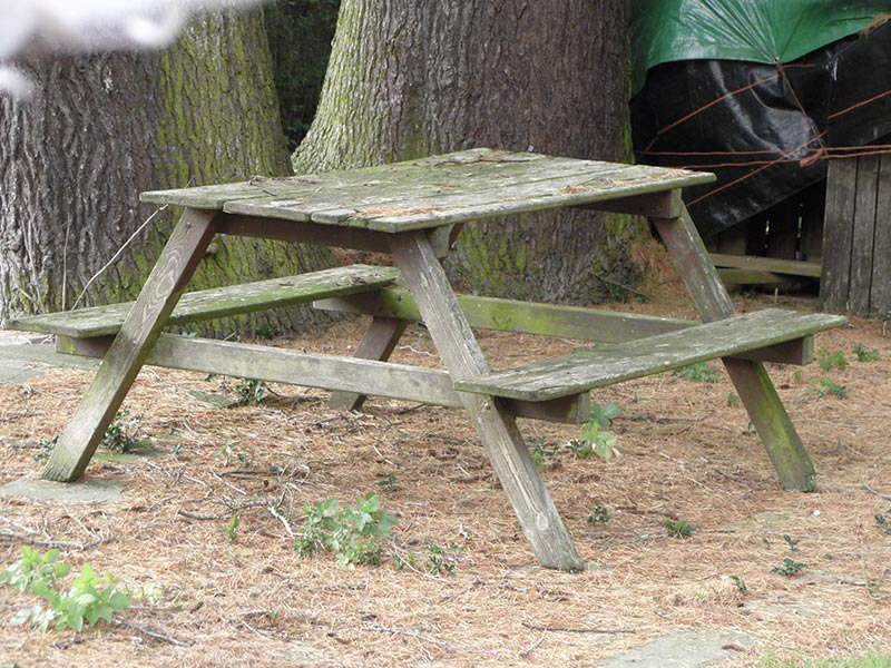 rotten wood picnic table in park